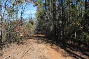 Owner Finance!! Large Tract in Elmore County- perfect for hunters and investors