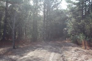 Beautiful 45 acre tract on Sprague Junction Road