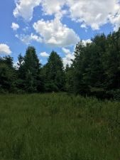 160 Acres in Pike County