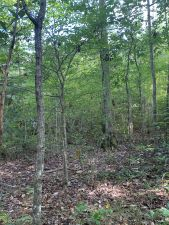 40 acres Montgomery County, Grady area*AVAILABLE