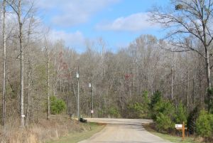 Highland Home wooded lots for homesites