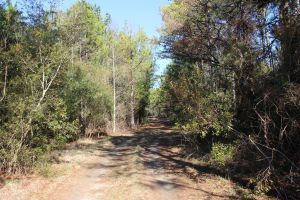 Small & Large Unrestricted Lots in Bullock County, Midway