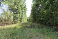 Barbour County 152 acres - ,