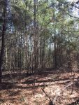 117 acres Coffee County, great place for hunting or homesite near Elba - ,