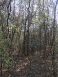 60 acres Samson, Alabama - ,