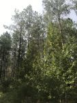 Beautiful Wooded Recreational Tract Grady Community - ,
