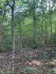 40 acres Montgomery County, Grady area - ,
