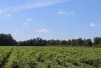 Beautiful Farm Land Wilcox County 86 acres - ,